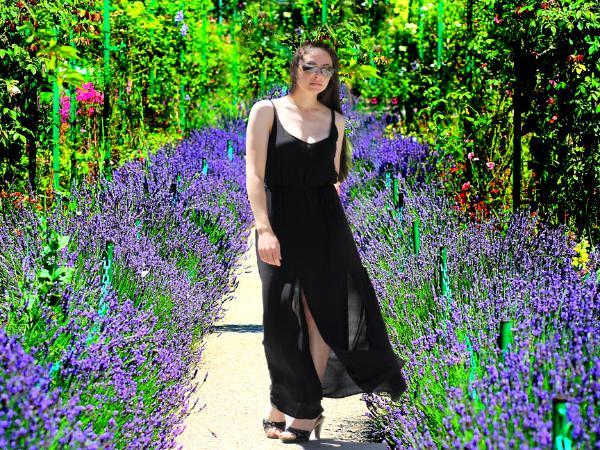Monet's Lavender